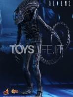hot-toys-aliens-alien-warrior-toyslife-icon
