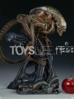 sideshow-mythos-alien-warrior-statue-toyslife-01